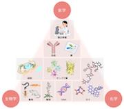 主要組織適合抗原   生物分子科...